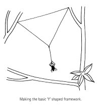 Spider Building a Web Diagram 3