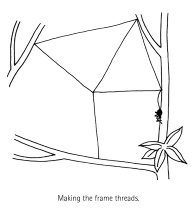 Spider Building a Web Diagram 4