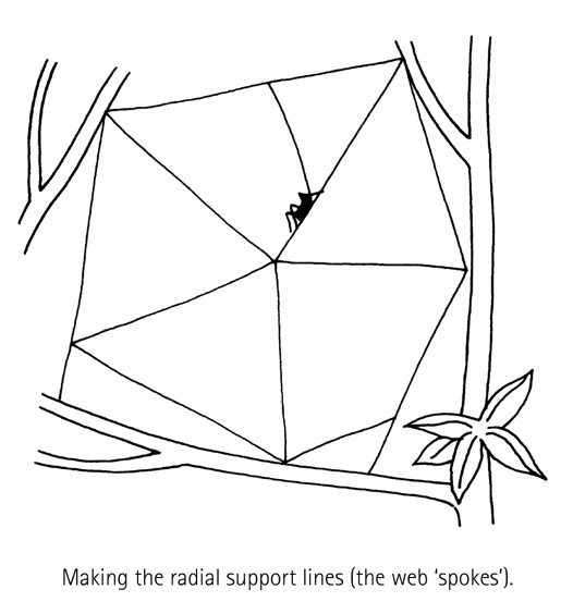 Spider Building a Web, Diagram 5
