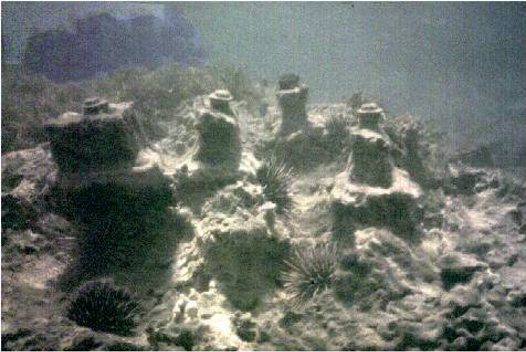 Extensive grazing by echinoids (Fig 7)