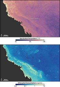 Relationship water temperature - coral bleaching, Great Barrier Reef