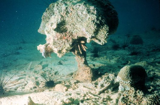 Coral reef showing bioerosion