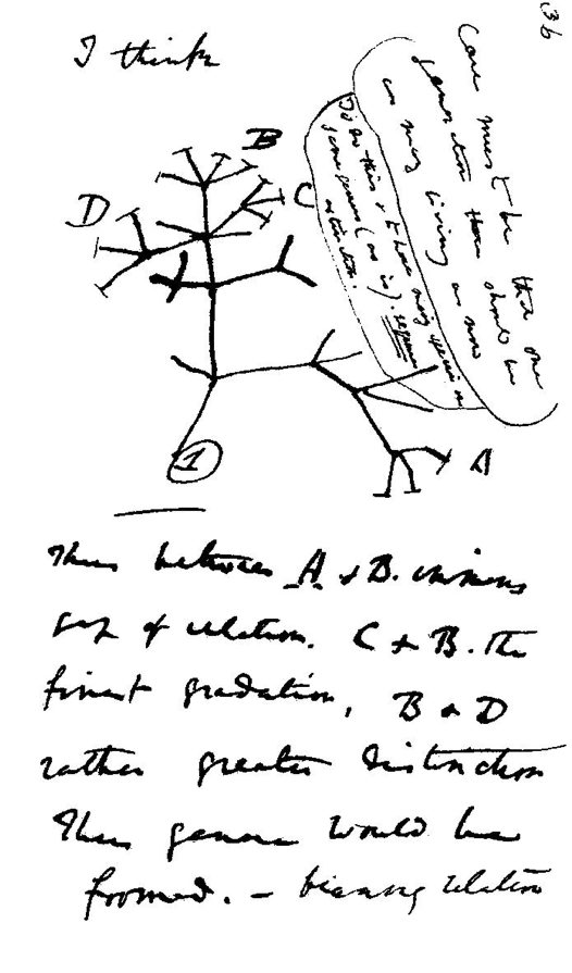 Evolutionary tree by Charles Darwin