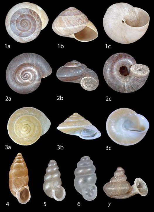 Land snails of Timor-Leste