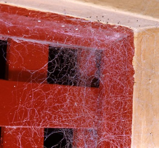 Black House Spider web on window frame