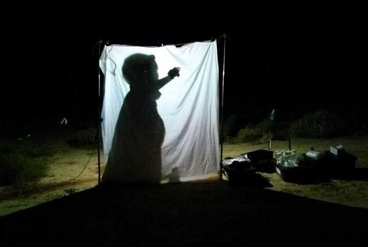 Light sheet trapping at Pulchera Waterhole