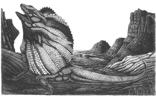 Reptile etching by Allan Robinson