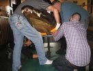 Moving the big croc 3