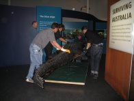 Moving the big croc 5