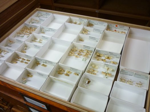 The Scotts' Lepidoptera specimens