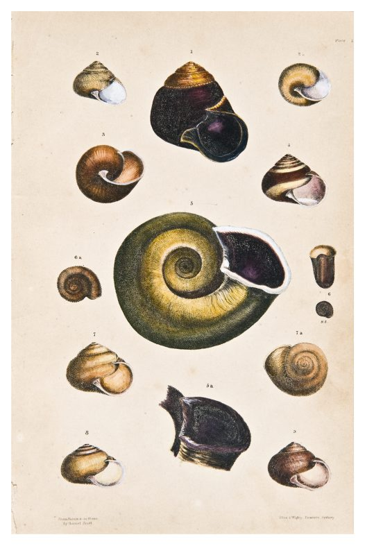 Land shells by Harriet Scott, Plate 1