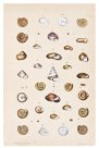 Land shells by Helena Forde (Scott), Plate 11