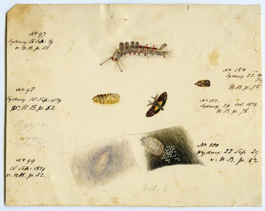 Sketches by Fanny Stirling, 1839