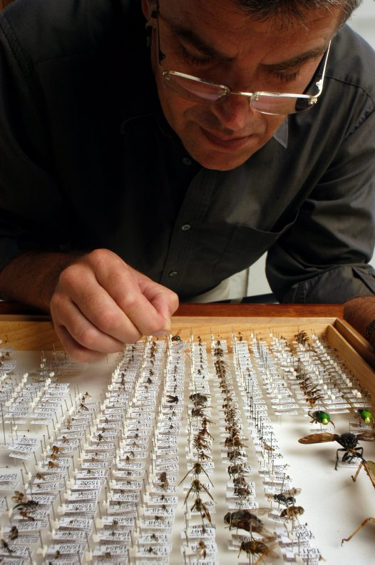 A small part of the entomology collection