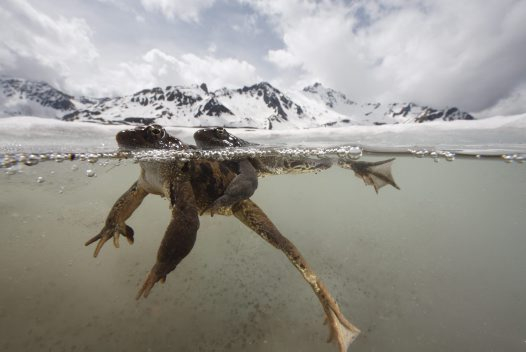 Wildlife Photographer of the Year 2011 #2