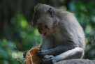 Temple of Death, Ubud: A Macaque