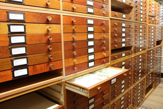Cabinets in the Vernon Wing of the Entomology Collection