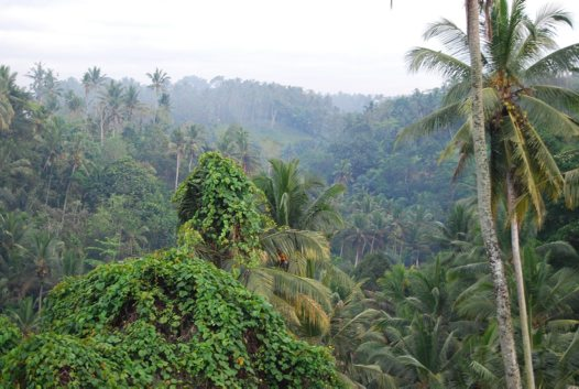 River Velley near Ubud
