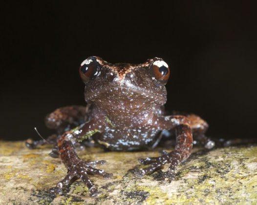 Misty Moss Frog