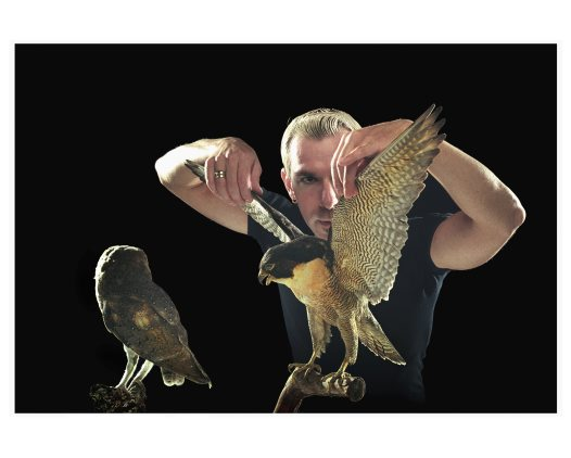 Tim Ralph, Manager of the Production Studios, adjusting the wings of a Peregrine Falcon