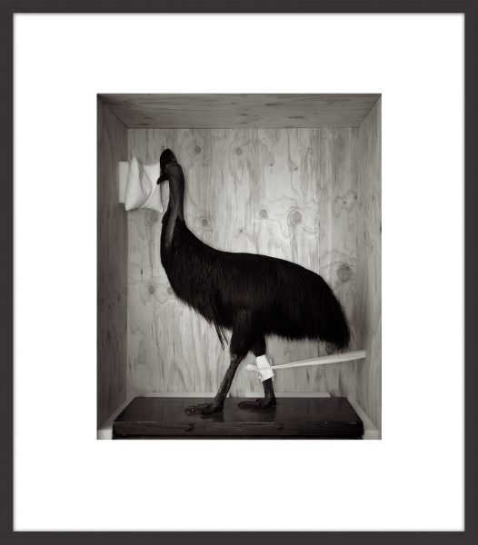 Boxed Cassowary