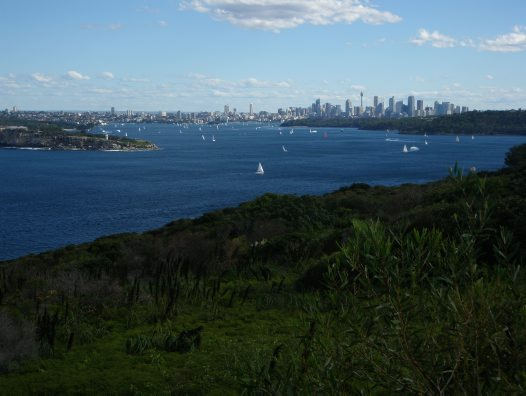 View from Manly on a Museum Members walk