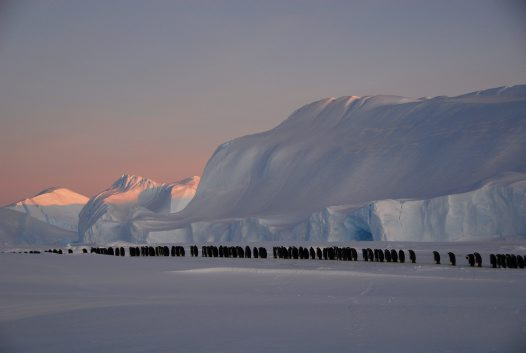 Best of Eureka - Dusk Procession: Male Emperor Penguins Find a New Location