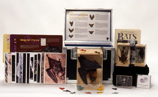 Museum in a Box - Bats
