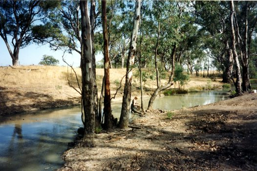 Tuppal Creek, the European Carp capture site