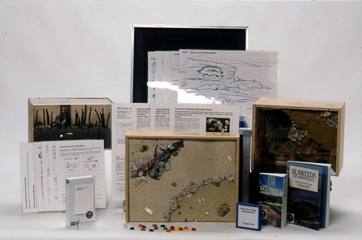 Museum in a Box - Life on the Seashore
