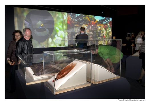 Rituals of Seduction: Birds of Paradise exhibition display