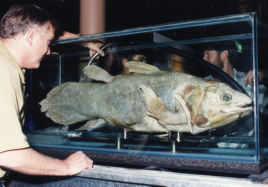 Mike Dingley, examining the Coelacanth