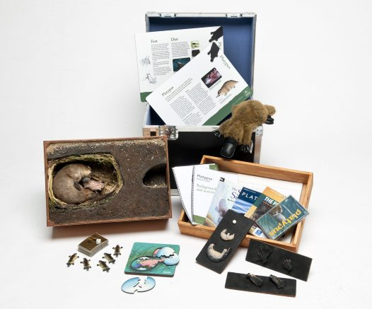 Museum in a Box - Platypus