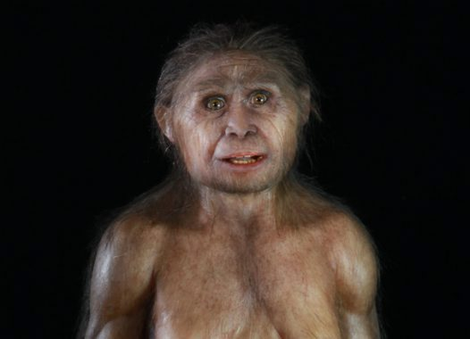 Reconstruction of Homo floresiensis