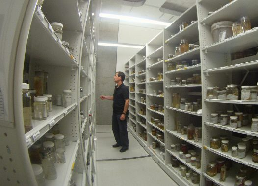Marine Invertebrate Specimens