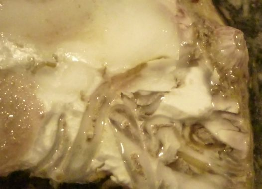 Infested oyster with hairpin erosion channels
