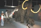 Winny sizes up a mammoth
