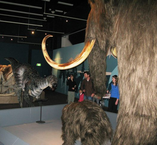 Winny meets the Mammoths