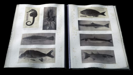 Fish - old photography album #5