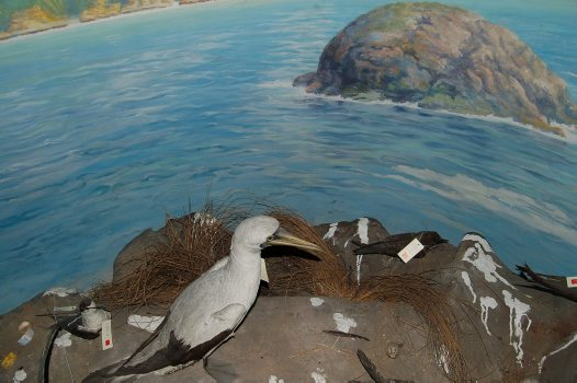 Lord Howe Island diorama backdrop