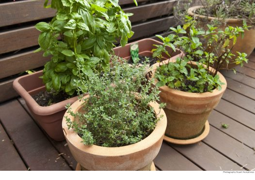 Green Home Guide: Balcony garden