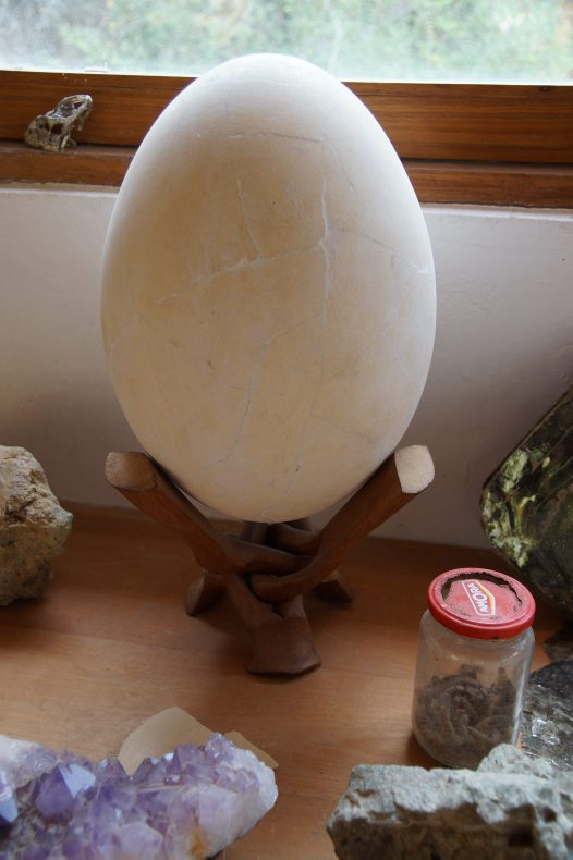 Madagascar 2012 - Elephant Bird egg