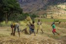 Madagascar 2012 - Thrashing rice harvest
