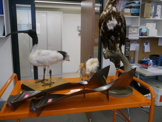 Bird exhibits and damaged jet engine blades #04