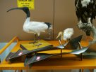 Bird exhibits and damaged jet engine blades #02