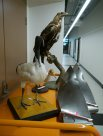 Bird exhibits and damaged jet engine blades #03
