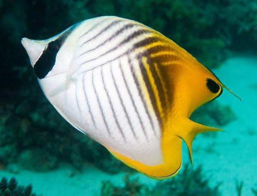 Big Island Fish Species