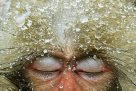 Wildlife Photographer of the Year 2012 #1