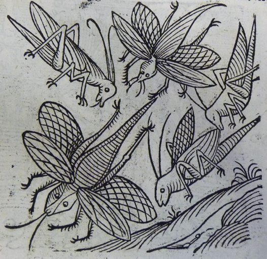 Locusts from Lycosthenes' Portents (1557)