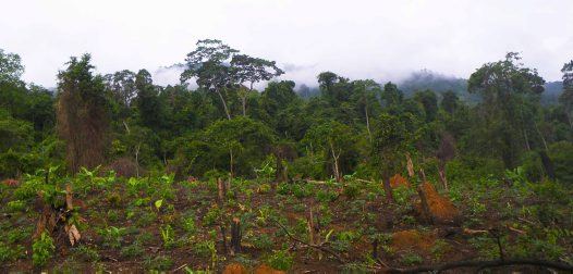 Forest destruction in southern Vietnam